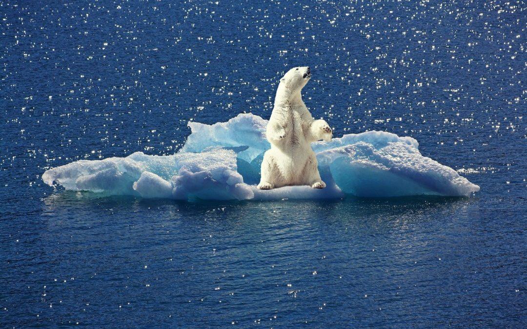Dérèglements climatiques : citoyens et entrepreneurs, nous pouvons agir !
